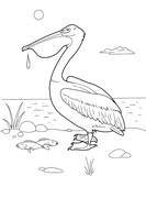 Детская разукраска животные пеликан